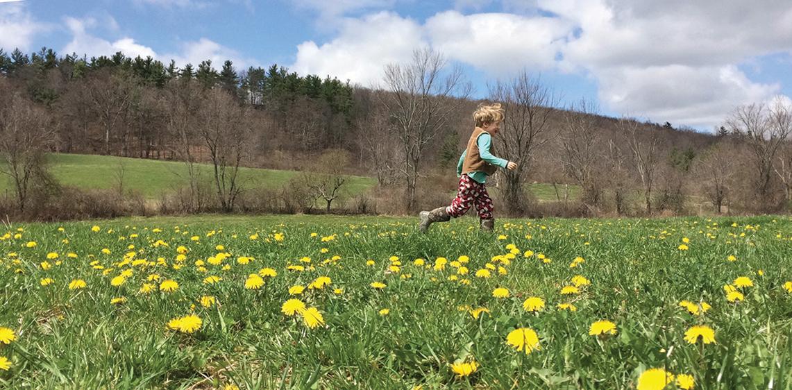 boy running through Hawthorne Valley Farm's fields with dandelions
