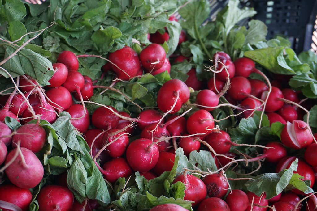 Hawthorne Valley Farm radishes
