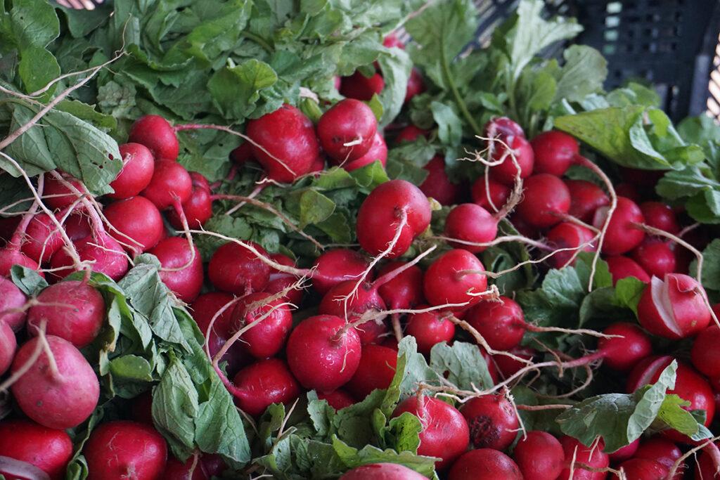 Hawthorne Valley Farm radishes