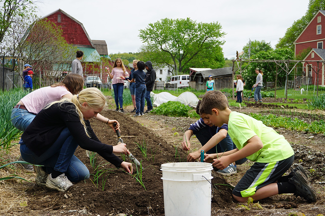 Students planting leeks in teaching garden last spring